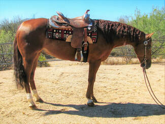 reining horse for sale